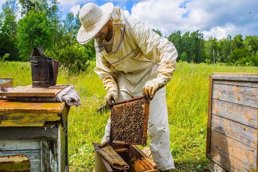 Бджолярі Кролевеччини вперше можуть отримати державну фінансову підтримку    05453 сайт Кролевця